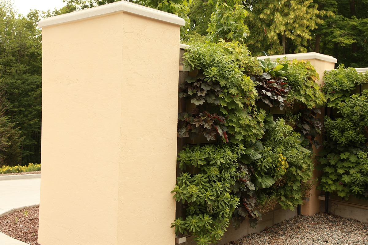 Green wall along residential garden wall, planted with perennials.