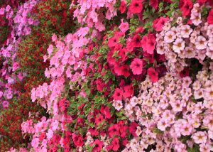 Bright annuals arranged vertically in a green wall.