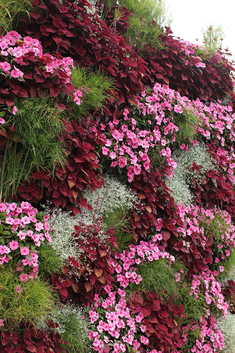 Combination of colors from different annuals on a living wall.