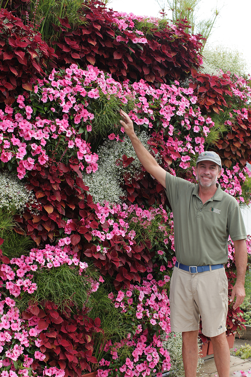 Different annuals create a great color scheme on a living wall.