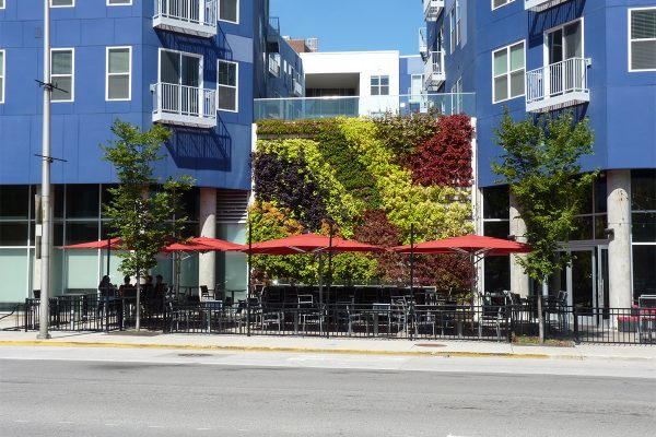 Dramatic planting of annuals in outdoor green wall at Pullium Square.