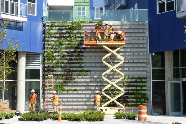 Installation of plants on the Pullium Square apartments in Indianapolis, Indiana.