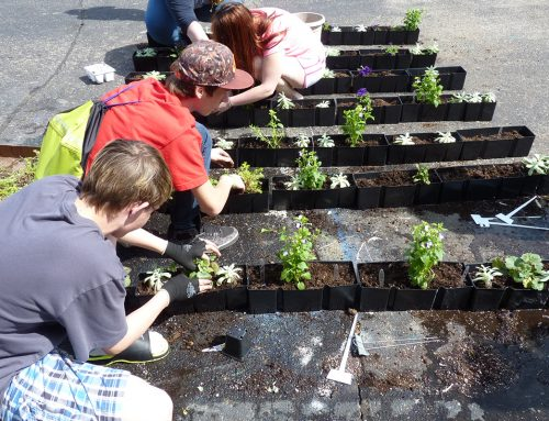 Riverview East High School, Vertical Garden Planting Exercise using Starter Plants