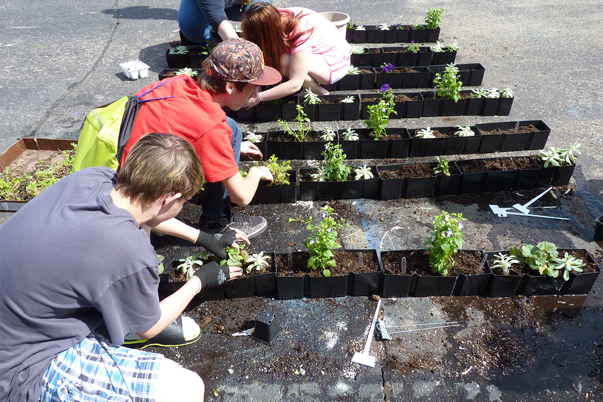 High school students plant living wall inserts as part of a science exercise.