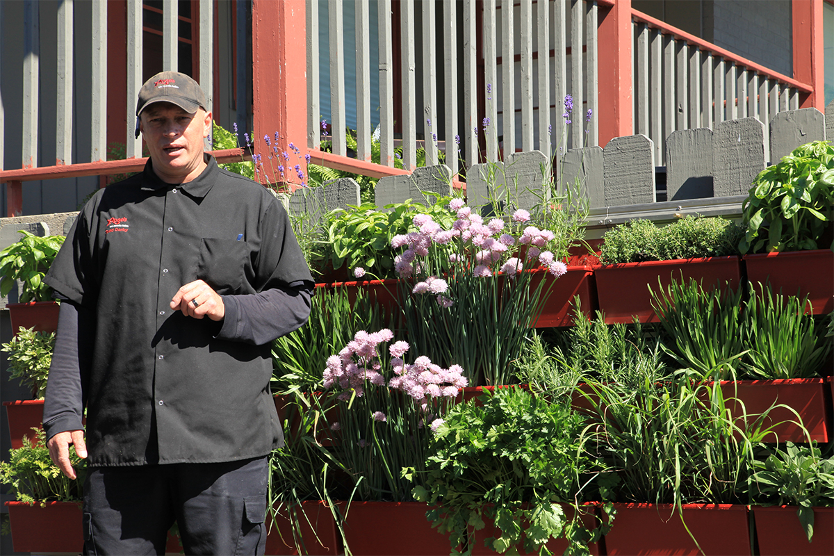 The chef at Rose's Restaurant uses green wall herbs in his cooking.