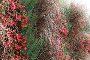 Sedges, Rushes, and Begonia in Wall Garden