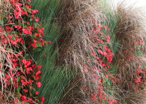 Splashes of red in a mixed green wall of annuals and perennials.