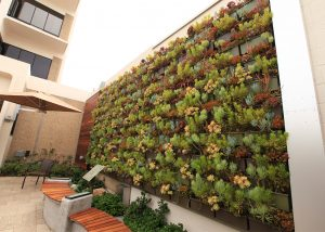 Green wall planted with succulents at Sharp Coronado Hospital.