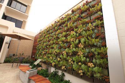 Green wall planted with succulents at Sharp Coronado Hospital.