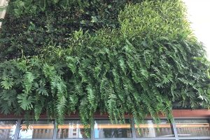 SLS Lux Miami - Pool Deck Green Walls