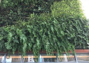 Living wall on pool deck at SLS Lux Miami.