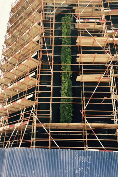 Plants thrived during the hottest months on this living wall trial in Dubai, UAE.