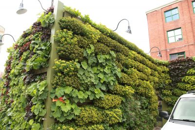 Green wall enclosure for HVAC equipment and dumpsters.