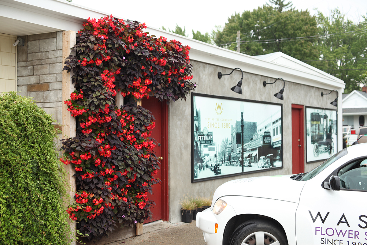 A living wall of red flowers adorns the entrance of a building.