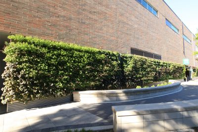 In cold winter climates (like Michigan, Maine or Minnesota), living walls planted with perennials require diligent oversight and adherence to timely maintenance events to optimize overwintering.