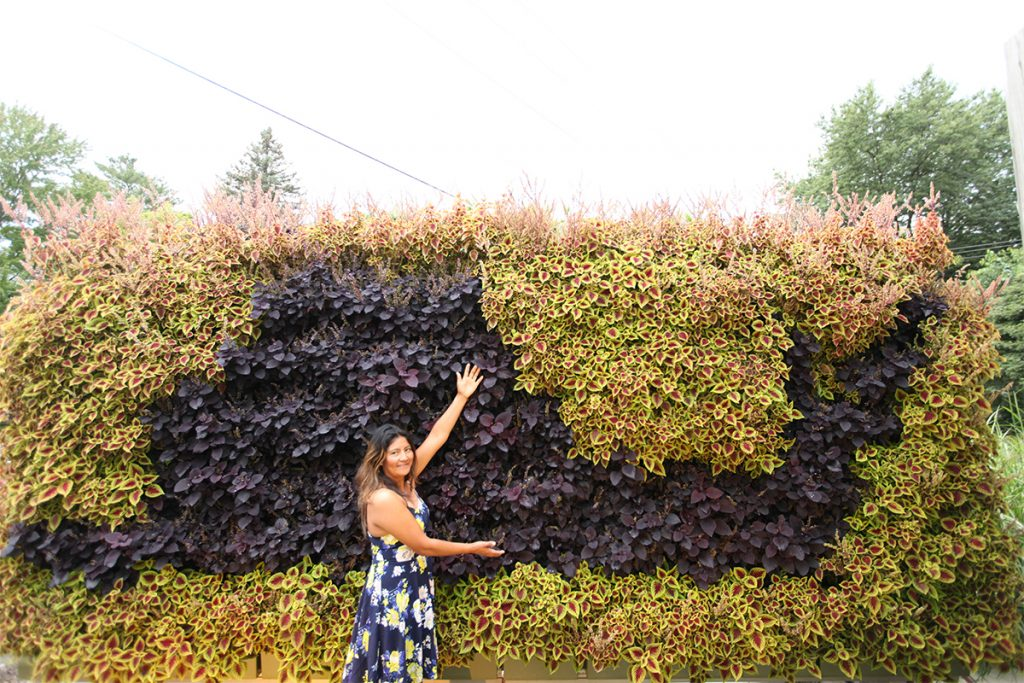 LiveWall with a Snail Pattern of Coleus