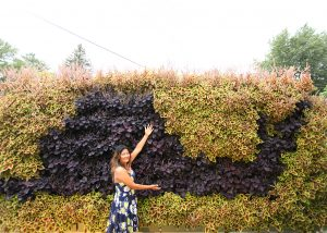 Contrasting Coleus creating a snail pattern on a green wall.