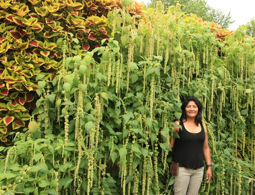 Wave of Amaranthus LiveWall