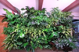 Broad Leaved Tropicals in Green Wall