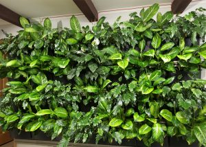 Great textures from a green wall with Dieffenbachia.