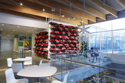 Festive holiday living wall with Poinsettias.