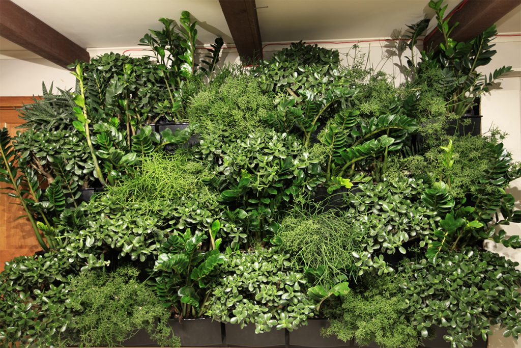Robust Succulent Plantings in Indoor Living Wall