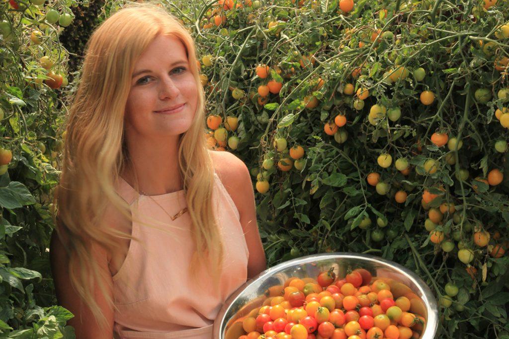 Tumbling Tom Tomatoes Harvested from Vertical Garden
