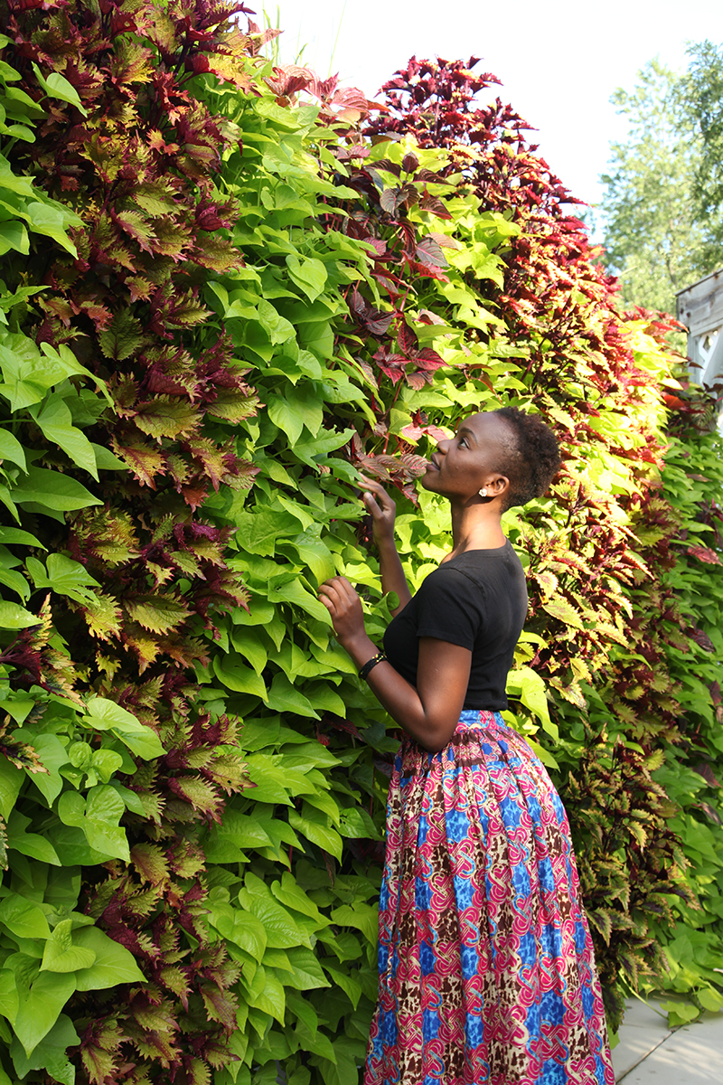 Columns of contrasting Sweet Potato and Coleus in a green wall.