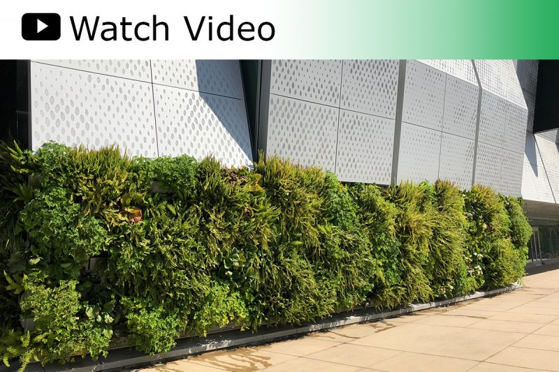 A video featuring the green living walls surrounding the outside of the Golden 1 arena in Sacramento, CA.
