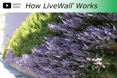Watch Video: How LiveWall Works