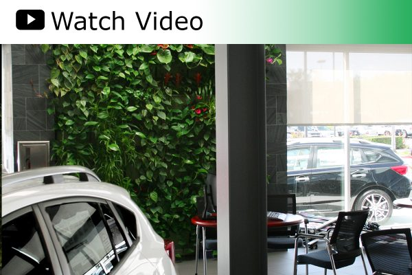 A video featuring the Green Living Wall installed at Subaru Pacific in Hawthorne, CA.