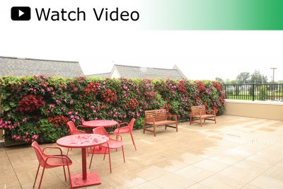 Watch Video: How LiveWall Brings Nature to Senior Communities