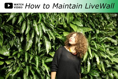 Watch Video - How to Maintain LiveWall