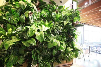 Living Walls improve indoor air quality by increasing oxygen levels, providing natural humidity, and reducing volatile-organic-compounds (VOCs).