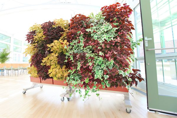 LiveScreen is a mobile living wall that allows for flexibility in plant design and wall placement.