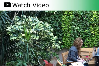 Watch Video: Therapeutic living wall in Moss Rehab's Sachs Conservatory.
