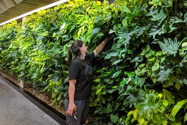 Living wall maintenance is simple, even for a wall of this size.