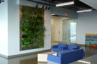 Newly planted green wall at McGarry Bair law firm in Grand Rapids, Michigan.