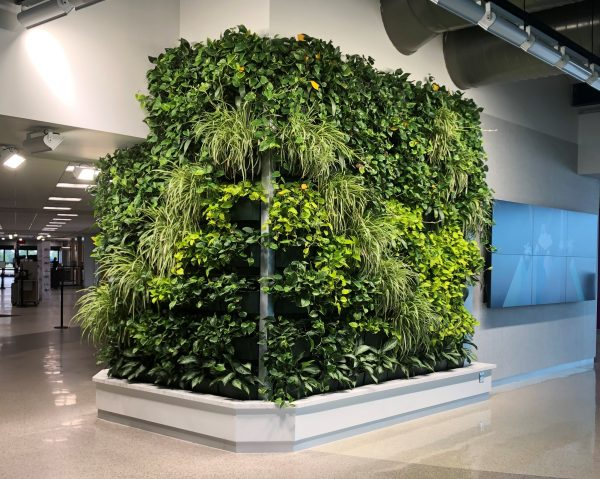 The vibrant green living wall at ATW provides comfort for travelers following the TSA checkpoint.