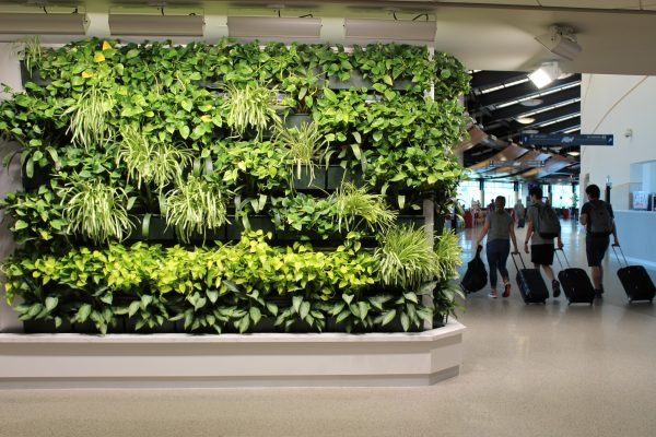 The green wall brightens the area and has become an unexpected attraction for ATW.