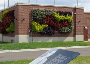 Multi-colored annuals in the Lansing Board of Water & Light's green wall.