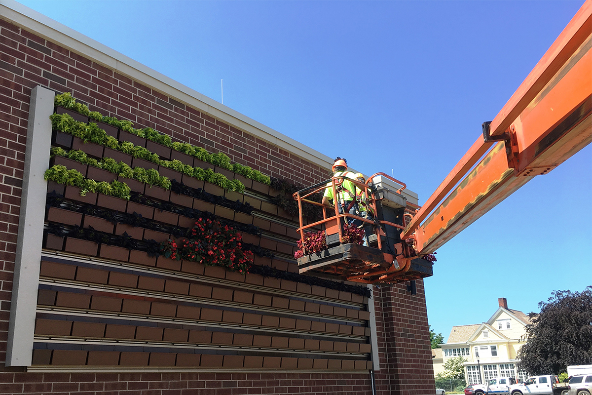 Placing plants inside LiveWall planter boxes on newly-installed living wall.