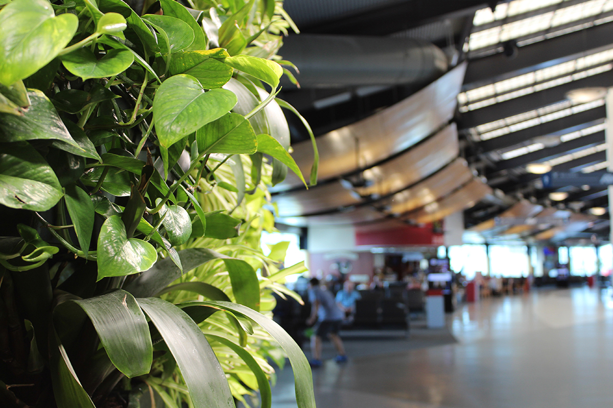 Close up of the Tropicals in the Appleton International Airport living wall