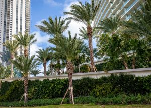 Green living wall with palm trees at Armani Casa in Miami