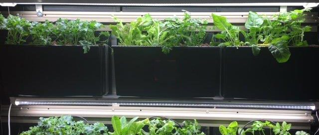 iveWall Indoor Strip Lighting for Herbs, Greens, Vegetables