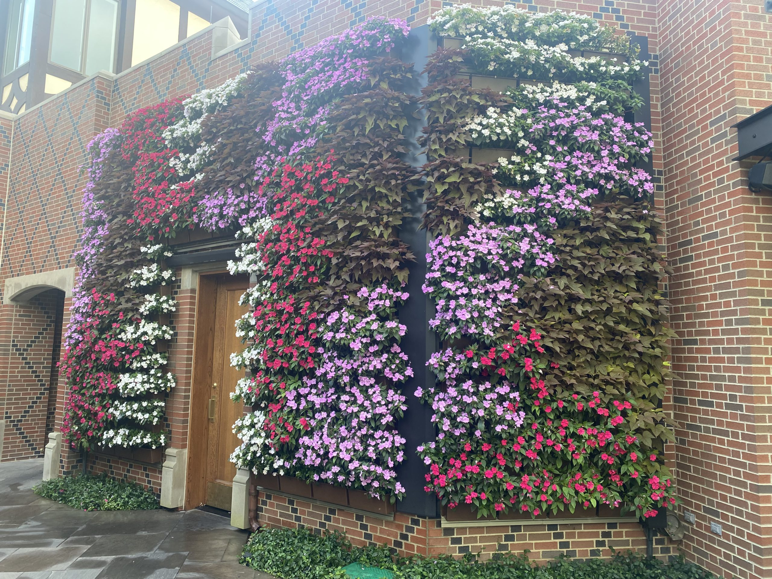 Colorful annuals pop against a brick exterior in this Michigan country club's LiveWall