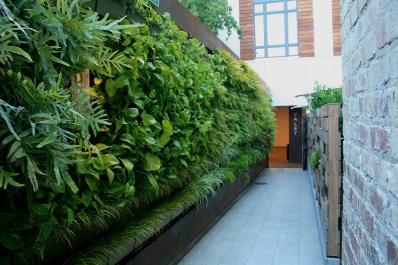 Living wall at Hotel Cerro in California