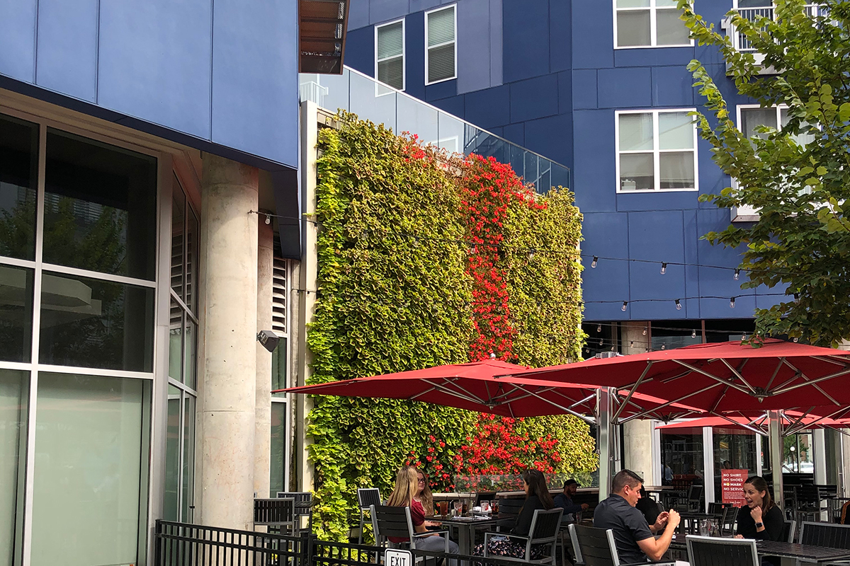 Living wall with outdoor seating umbrellas in urban setting.